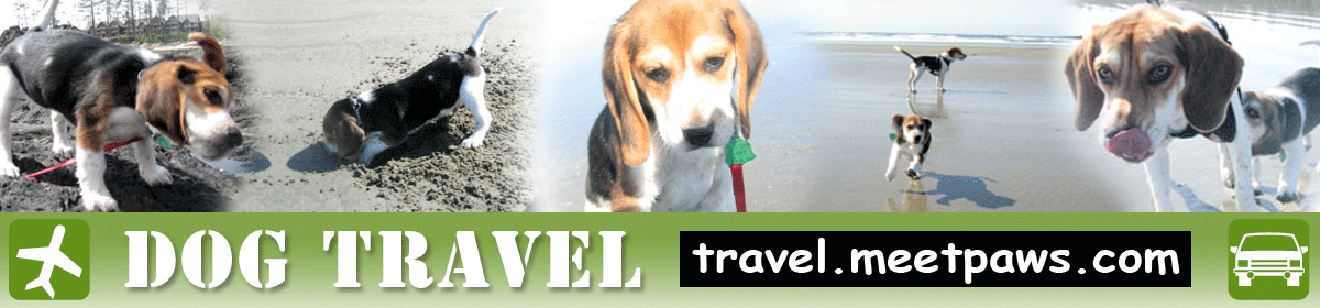Dog Travel! travel.meetpaws.com
